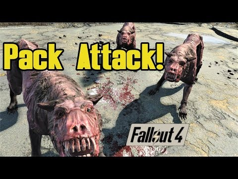 Pack Attack! Mongrel Dogs With Social Awareness   A Fallout 4 Mod  