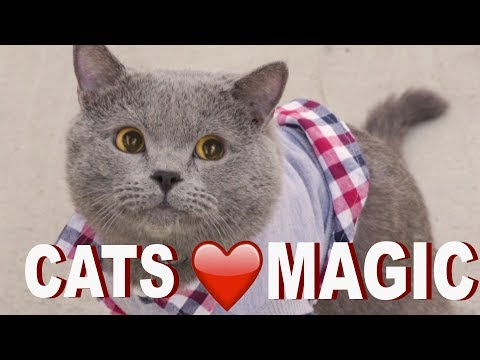 Performing Magic Tricks for Cats
