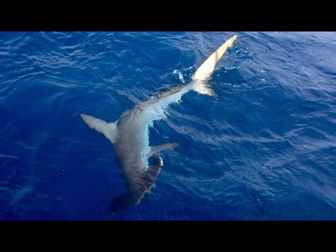 GIANT SHARKS & LOST RODS -- Day in the Life as a Saltwater Fisherman (ft. BlacktipH)