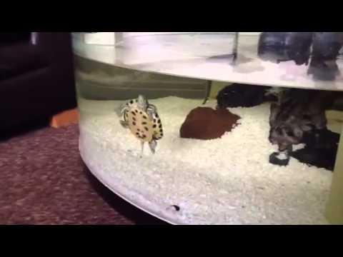 Aquarium coffee table update 2013 turtle tank