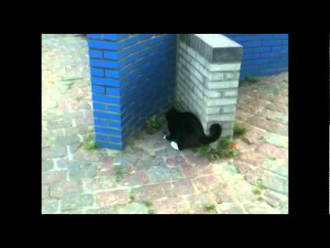 Cat chasing Mouse.mov