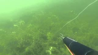 Spearfishing Pike 20.1282 Lbs          Lydeka 9.13 kg