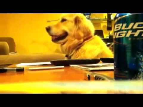 Funny Animal Video the Funniest Youtube Animal Videos 2013 compilation