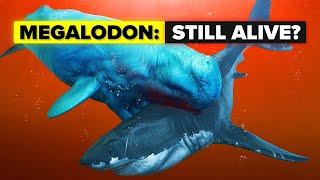 Does The Megalodon Shark Still Live?
