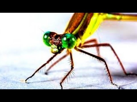 10 Weird Facts About Insects