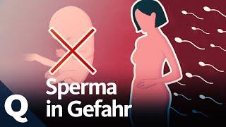 Schlechtes Sperma: Warum Kinder zeugen immer schwieriger wird | Quarks