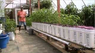 Dutch Bucket Hydroponics How It Works How To Make Your Own Buckets