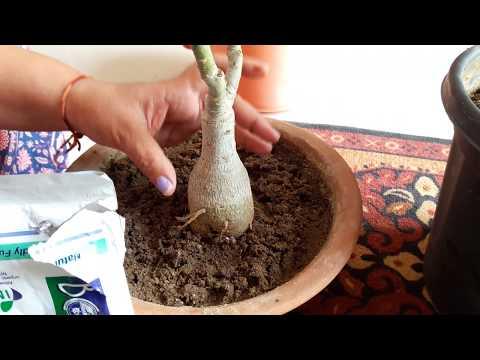 Best Bio Fungicide - Trichoderma || Fun Gardening