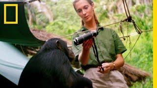 Sneak Peek - JANE | National Geographic
