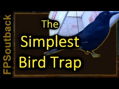 The Simplest Bird Trap