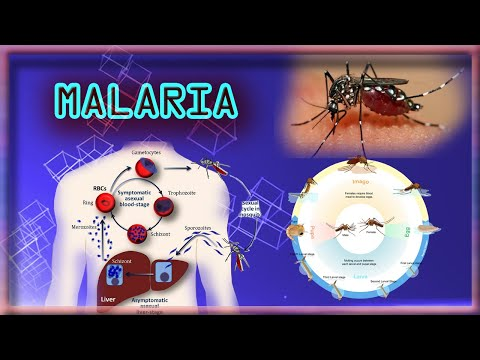 Malaria parasite Test # dengue fever ,,Harib Diagnostic Lab