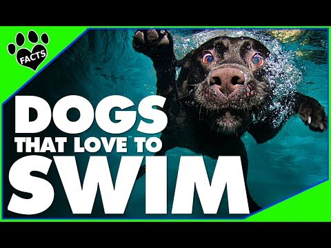 TopTenz: Top 10 Dogs That LOVE Water/To Swim - Animal Facts