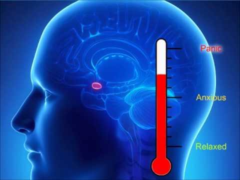 Amygdala hijack fight or flight response|how to stop anxiety