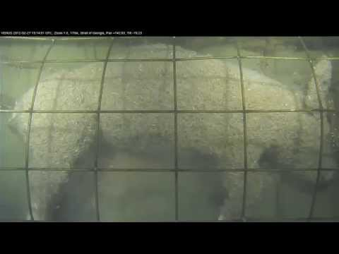 Caged pig forensic experiment in the ocean