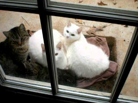 Oshie the Cat's 4 stray friends keeping warm...