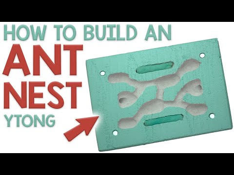HOW TO BUILD A YTONG ANT NEST | Creating a Formicarium out of AAC
