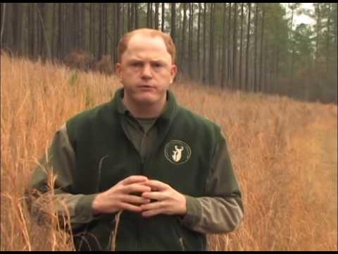 Native Warm Season Grasses: QDMA Management Minute