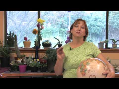 Flower Gardening Tips : How to Grow Moonflower