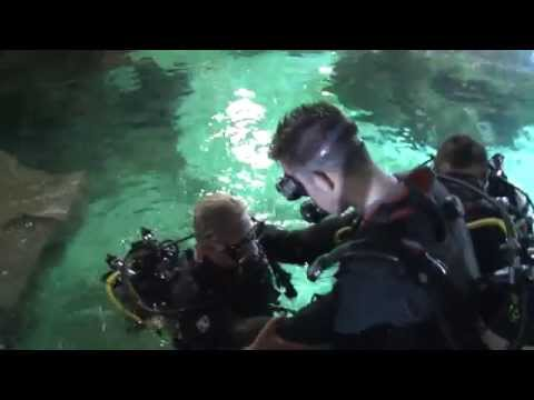 News: Diving With Sharks at Blue Planet Aquarium