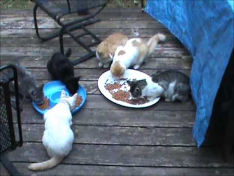 Feral  Cats | WARM |16  Tons