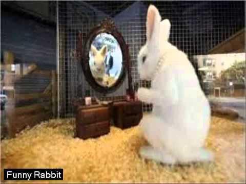 Funny Rabbit Jokes  [HD]  ||  Video Rabbit