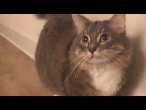 CAN I TEACH MY CAT TO DO TRICKS!?