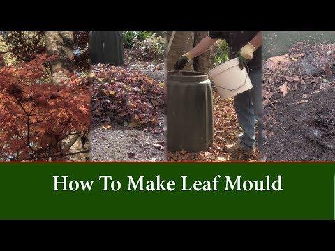 How to Make Leaf Mould (Leaf Mold) Faster and Better Compost