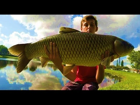 How to catch BIG Grass Carp the easiest way tutorial
