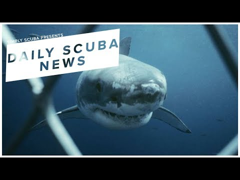 Daily Scuba News - Calls For Shark Cage Regulations