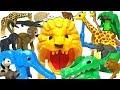 【ANIA】Animals Transformed! Athletic Safari