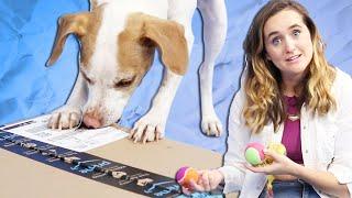 Dogs Unbox Amazon