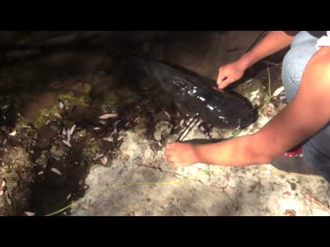 Bowfishing Catfishing with homemade reel