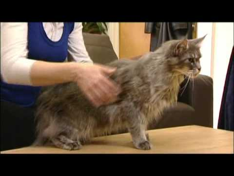 How to tell if your cat is overweight
