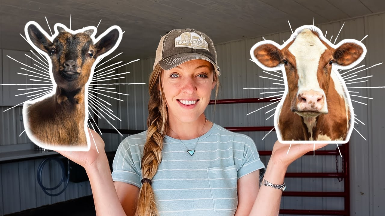 Should You Get a Milk Cow OR Dairy Goat for YOUR Homestead?