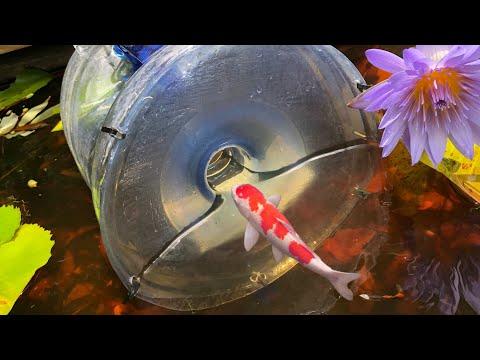 MEGA FISH TRAP Catches Rare KOI