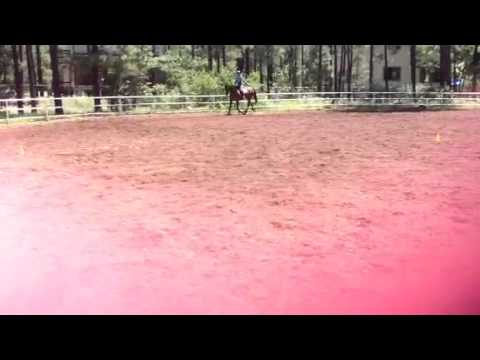 Warm up today 's goal learn the dressage test