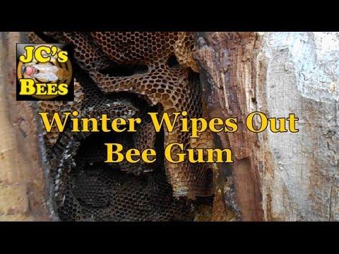 Honey Bees Die In Log Over Winter