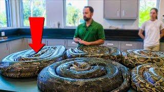 सांप तो बहुत देखे होंगे लेकिन ऐसे सांप पहले कभी नहीं देखा होगा | Snakes Videos | Poisonous Snakes