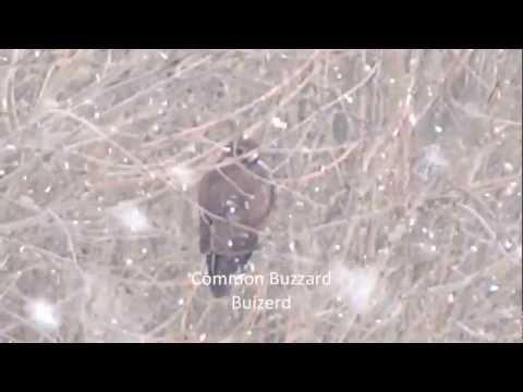 Birds survive Winter / Vogels overleven Winter