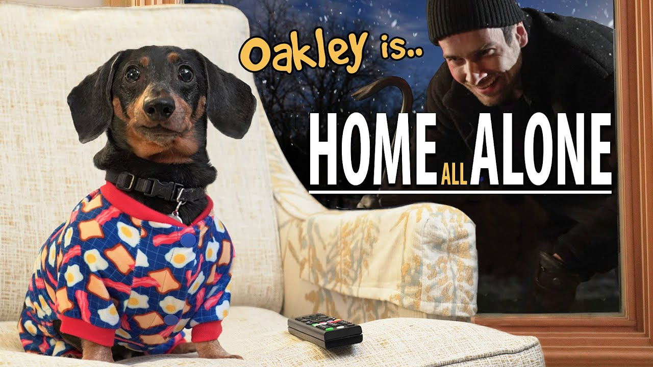 Ep#8: Oakley the Dachshund is.. HOME ALONE! 😮