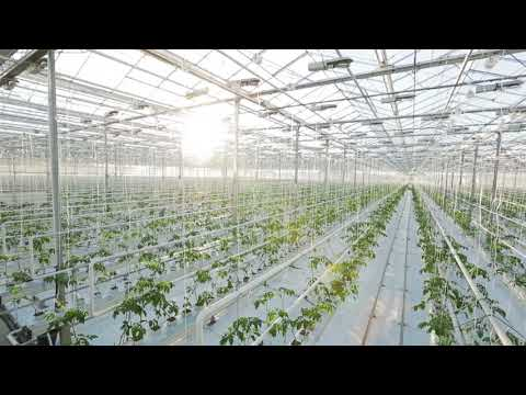 The Influence of Light on Crop Growth
