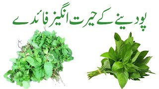 Pudina benefits in urdu | Pudina khane ke fayde | Pudina ka istemal
