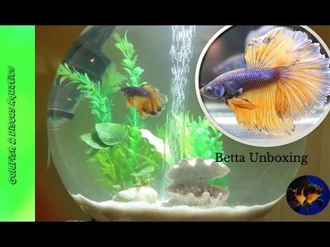 Unboxing a Halfmoon Betta// Biorb aquarium