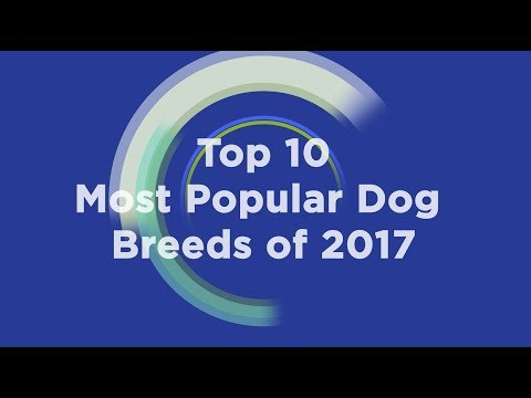 Top 10 Most Popular Dog Breeds in 2017