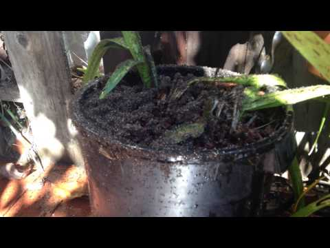 Ants In A Flower Pot 11/7/14