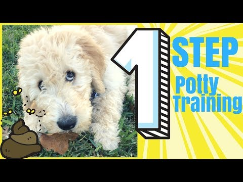 1 STEP: Potty Training for Your New PUPPY! Seriously, Easiest Dog Training Hack that Worked For Me!