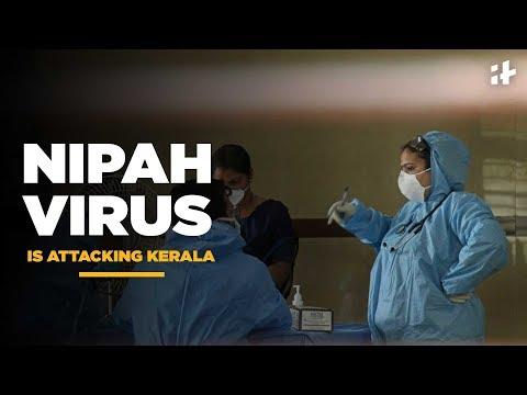 Indiatimes - Nipah Virus Is Attacking Kerala | Nipah Virus Causes Over 9 Deaths In Kerala