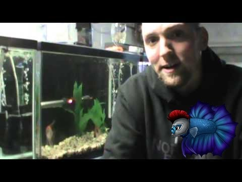 Top Three Fish To Breed For Money Part 1 Project