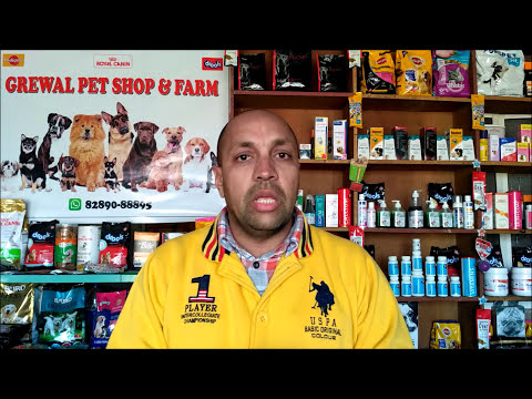 Pet Care - Pregnant Pets Dog and Cat - Bhola Shola