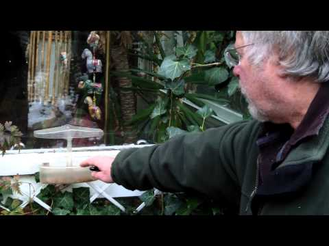 What species of bird come to a window feeder? asked Kain Prestwood. #AskBillOddie